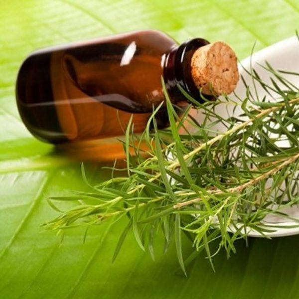 Бутылочка с маслом чайного дерева лежит на листе, рядом веточка с зелёными листьями