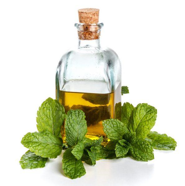 эфирное масло мяты и листья мяты