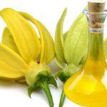 масло иланг-иланга и цветок