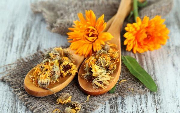 Сухие цветки календулы на деревянной ложке
