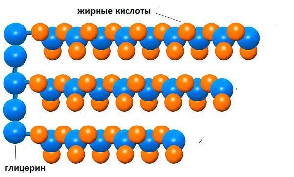Строение триглицеридов