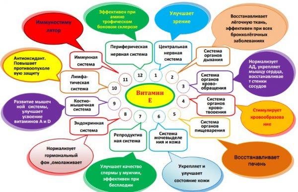 Полезные свойства витамина E